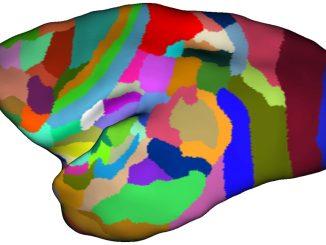 L'area prostriata area visiva periferica a diretta comunicazione