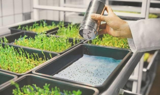 Niente terra e pochi sprechi d'acqua: la filosofia di Lokal. Vedi anche:le tecnologie che stanno cambiando il nostro modo di mangiare.|SPACE10.IO
