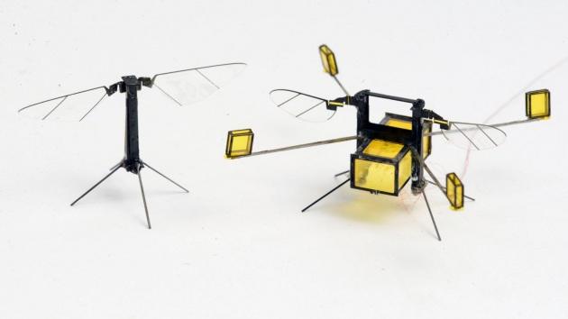 Due versioni di api robotiche: quella a destra è la più recente, più stabile e capace di riemergere dall'acqua.|YUFENG CHEN, E. FARRELL HELBLING, AND HONGQIANG WANG