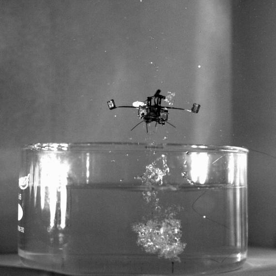 L'istante esatto in cui il Robot Bee riemerge dall'acqua, grazie a una micro esplosione di gas.| YUFENG CHEN, E. FARRELL HELBLING, AND HONGQIANG WANG