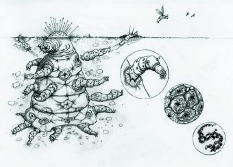 """""""The Octomite"""": un alieno complesso costituito da una gerarchia di entità, dove ogni gruppo di entità di livello inferiore ha adeguato i propri interessi evolutivi in modo tale da eliminare efficacemente il conflitto. Le varie parti sono specializzate in vari compiti e sono reciprocamente dipendenti. Crediti: illustrazione di Helen S. Cooper"""