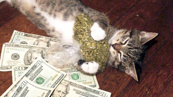 La legalizzazione della marijuana apre opportunità per business milionari