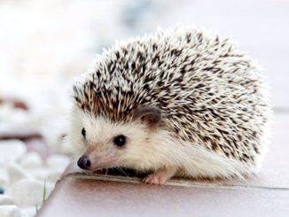 Sempre più nuovi animali selvatici da città