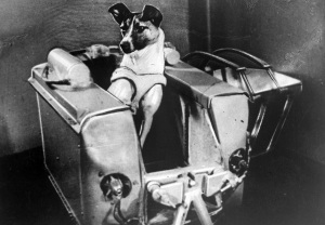 Laika morì nel suo piccolo box per surriscaldamento, sola e probabilmente folle di paura.