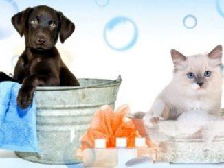 Intelligenza animale del cane e del gatto