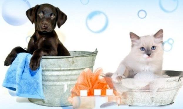 Intelligenza Animale Del Cane E Del Gatto Rivista Periodica D