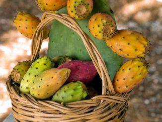 L'Opuntia ficus-indica, o fico d'India è ottimo anche come cibo