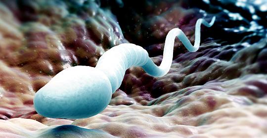 Gli spermatozoi per il trasporto di medicinali contro il cancro