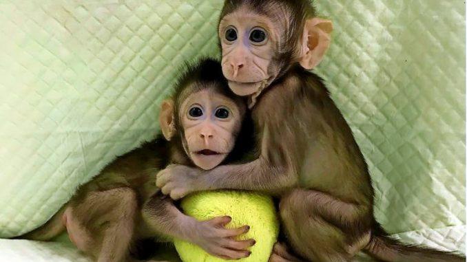 Siamo sempre più vicini alla clonazione umana