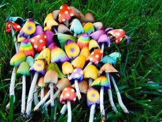 I funghi allucinogeni hanno proprietà farmaceutiche antidepressive