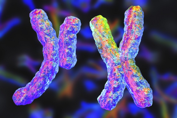 Cromosomi sessuali
