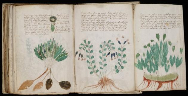 Il Manoscritto Voynich, 204 pagine su pergamena. Anche le figure sono indecifrabili: molte sono di piante non identificabili con vegetali noti.|Wikimedia Commons