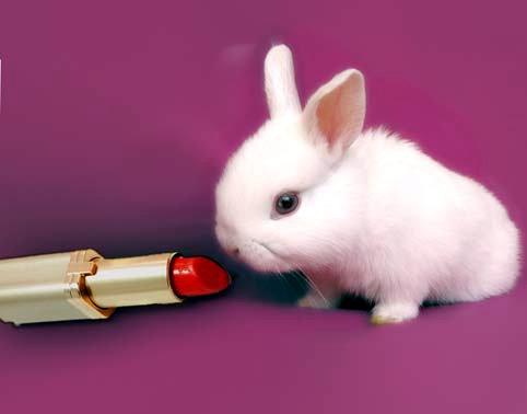 Sperimentazione sugli animali in cosmesi, European Parliament