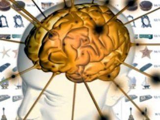 Grazie al sonno il cervello si organizza e ricarica