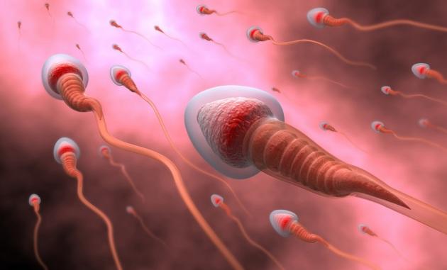 La locomozione degli spermatozoi: conoscerne i meccanismi aiuterà a contrastare l'infertilità maschile.|Shutterstock