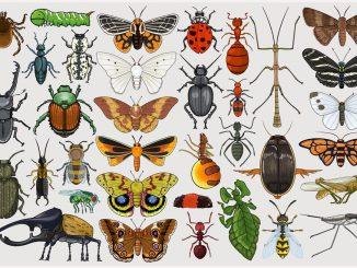 Lathrobium violii, nuova specie di insetto scoperta in Italia