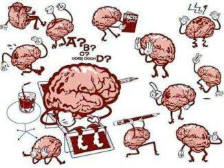 Nell'apprendere il cervello si adatta autonomamente