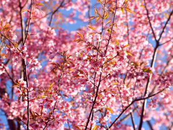 Arriva la primavera. Crediti:imagesthai.com/Pexels