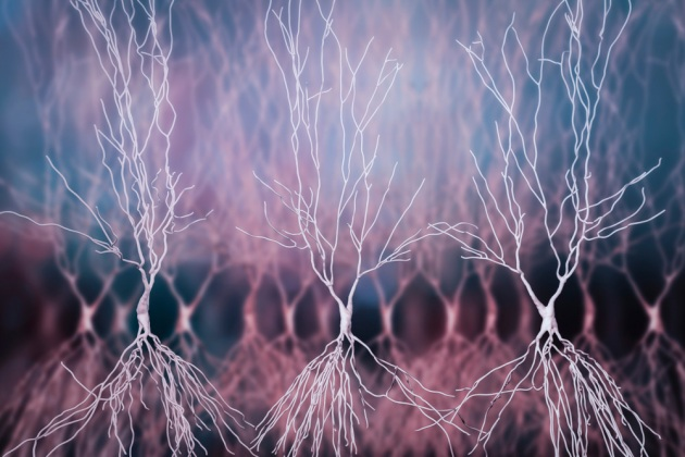 Neuroni nell'ippocampo umano: una ricostruzione in 3D.|SHUTTERSTOCK