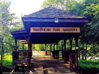 In pericolo abbattimento gli alberi della foresta di Białowieża