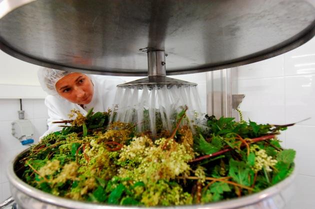 Preparazione di una soluzione omeopatica nei laboratori Boiron. Le piante vengono fatte macerare prima di essere messe in alcol e acqua per l'estrazione dei principi attivi.|PATRICK ALLARD/REA/CONTRASTO