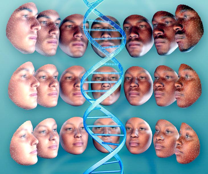 Ricostruito l'aspetto delle persone a partire dal DNA