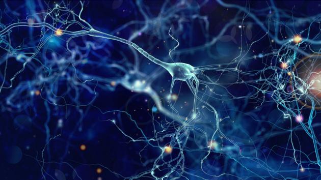 Neuroni e connessioni neurali in un'illustrazione medica.|Shutterstock