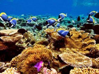 Um mare pieno di coralli nel nord della Sicilia
