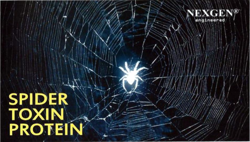 Scoperte nuove proprietà delle proteine della tela di ragno