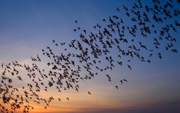 La prevenzione di potenziali epidemie passa per lo studio degli animali ospiti.|Shutterstock