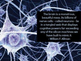 Misterioso nuovo neurone scoperto nel cervello umano