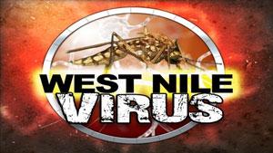 West Nile Virus sempre più diffuso a causa dei cambiamenti climatici