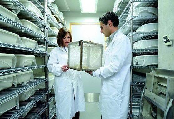 Il laboratorio delle zanzare dell'Imperial College