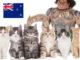 Omaui, un paese vietato ai gatti in Nuova Zelanda