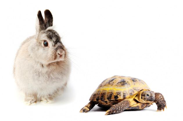 Chi va piano va lontano, non solo in senso figurato.|Shutterstock