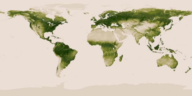 Una mappa elaborata dalla NOAA e dalla NASA mostra la distribuzione e la densità della copertura forestale sulla Terra.|NOAA