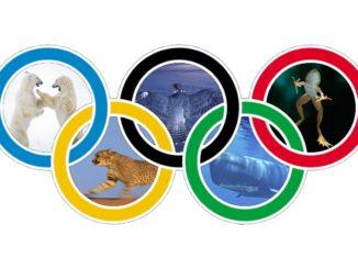 Le Olimpiadi, nel Mondo Animale, le vincono i più lenti