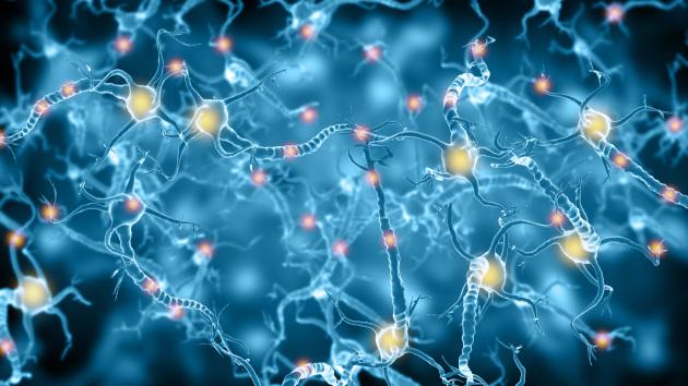 La comunicazione tra cellule nervose in un'illustrazione scientifica.|Shutterstock