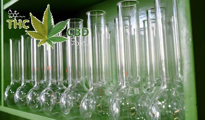 In arrivo la marijuana sintetica creata in laboratorio