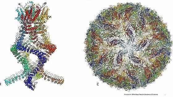 Soluzioni ambientaliste vincono il Premio Nobel per la chimica 2018