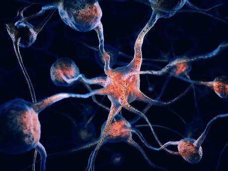 Illustrazione di collegamenti tra neuroni. (age fotostock / AGF)