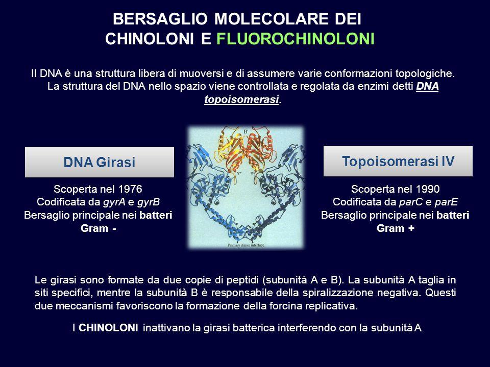 Il DNA è una struttura libera di muoversi e di assumere varie conformazioni topologiche. La struttura del DNA nello spazio viene controllata e regolata da enzimi detti DNA topoisomerasi. DNA Girasi. Topoisomerasi IV. Scoperta nel Codificata da gyrA e gyrB. Bersaglio principale nei batteri Gram - Scoperta nel Codificata da parC e parE. Bersaglio principale nei batteri Gram + Le girasi sono formate da due copie di peptidi (subunità A e B). La subunità A taglia in siti specifici, mentre la subunità B è responsabile della spiralizzazione negativa. Questi due meccanismi favoriscono la formazione della forcina replicativa. I chinoloni inattivano la girasi batterica interferendo con la subunità A.