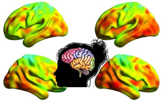 Mantenere il cervello giovane grazie a una proteina