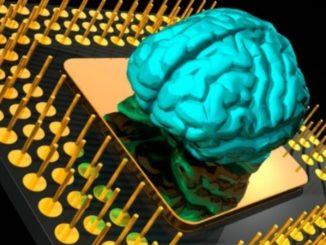 Il supercomputer del cervello formato dai dentriti