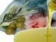Dall'olio d'oliva una difesa per il tumore al colon