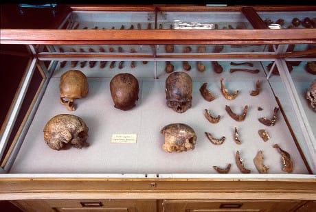 Resti umani rinvenuti a Lagoa Santa, in Brasile. (Cortesia Natural History Museum of Denmark)