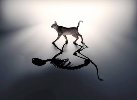 "Interpretazione artistica del ""gatto di Schrödinger"", che è al tempo stesso vivo e morto (© Science Photo Library RF / AGF)"