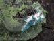 Sulle Dolomiti scoperto nuovo minerale, la Fiemmeite