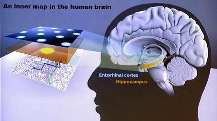 Mappe mentali cerebrali organizzano il nostro pensiero
