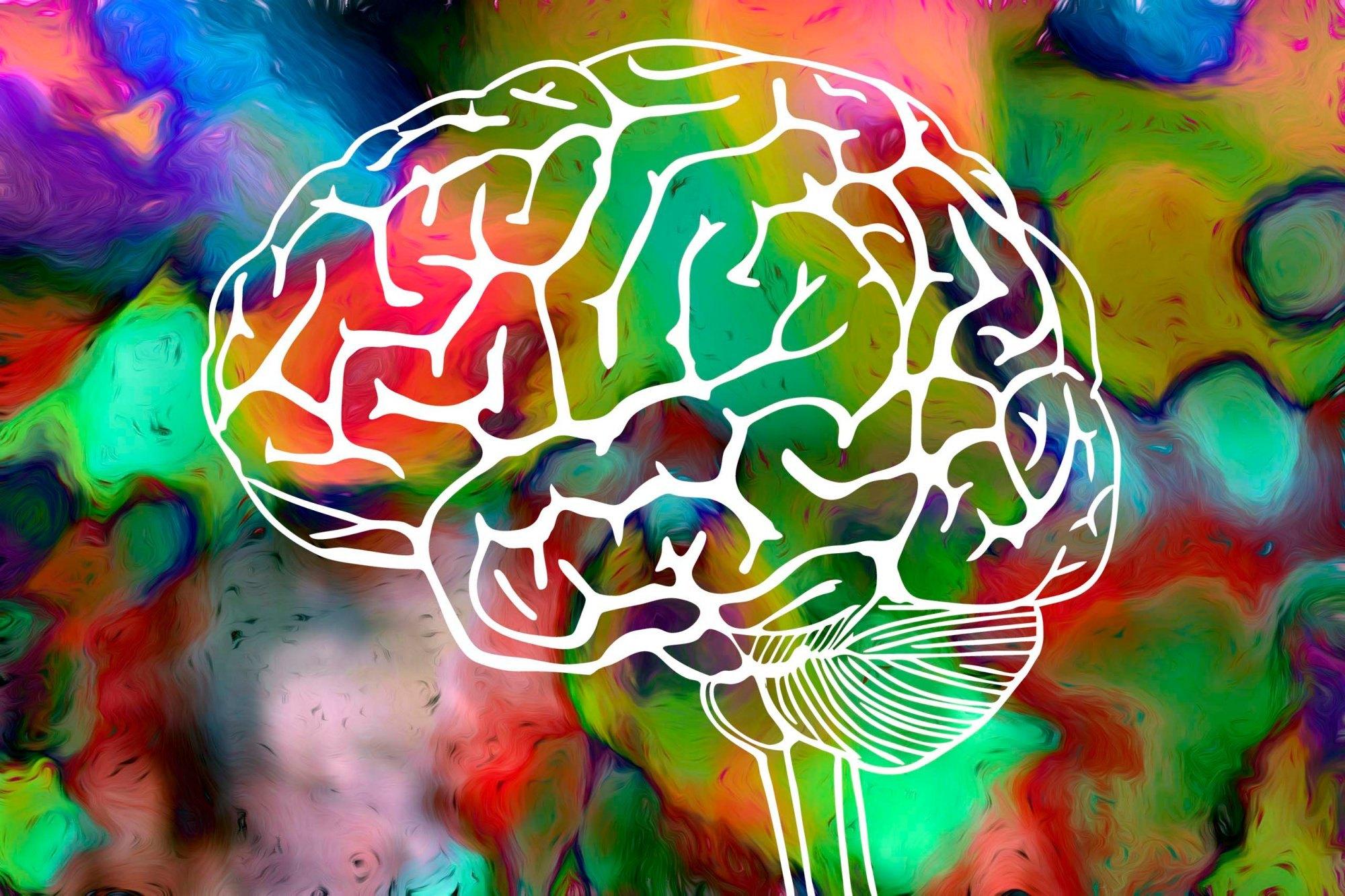 Creati cervelli in provetta in grado di funzionare